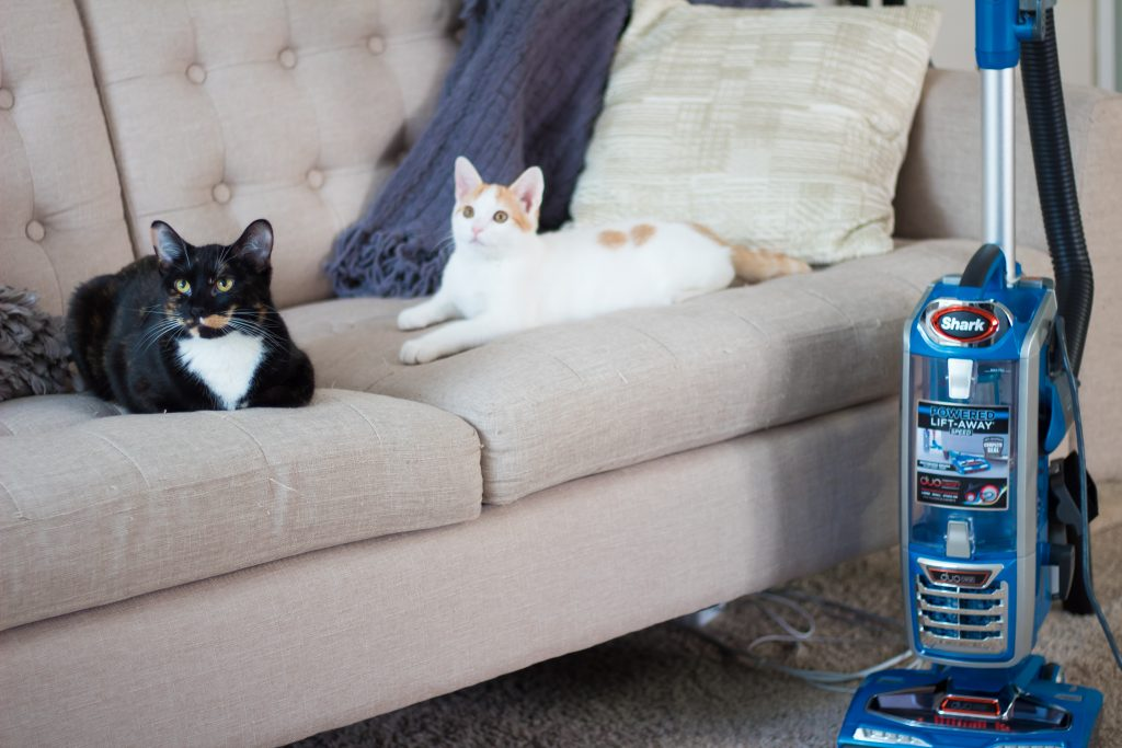 5 Ways To Keep Your Home Free Of Pet Hair (When You Have Multiple Pets)