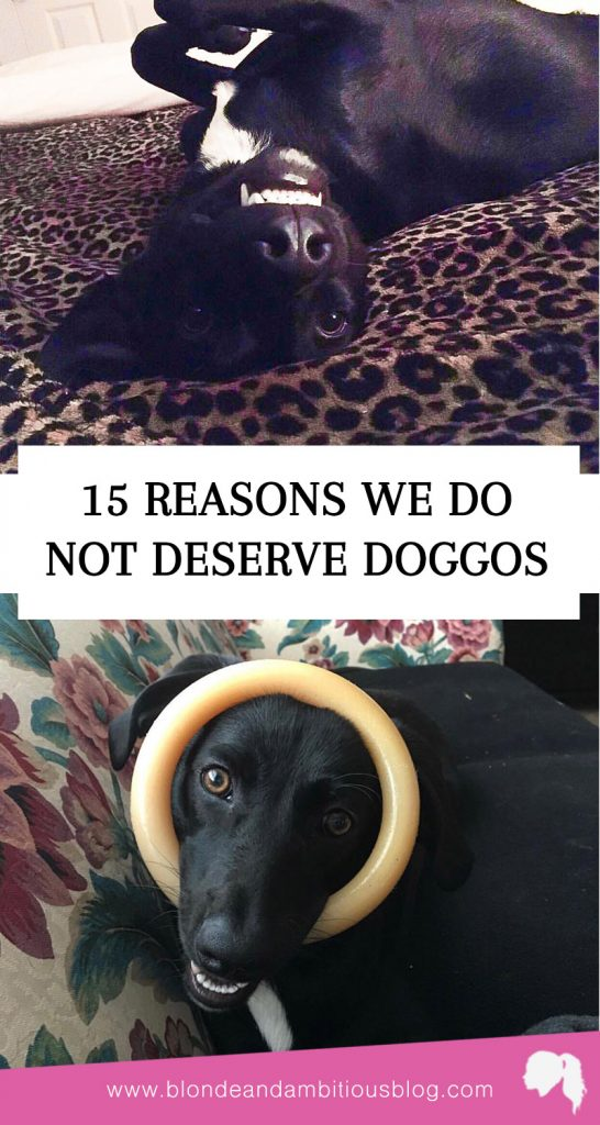 15 Reasons Humans Do Not Deserve Doggos