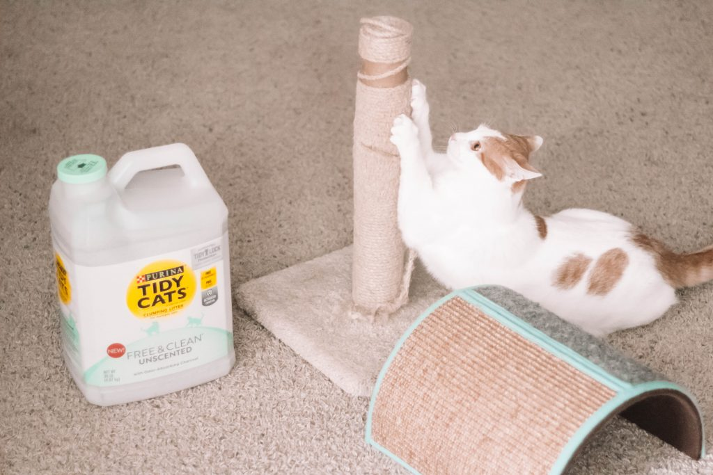 5 Tried & True Products YOU NEED For Your Feline Friends