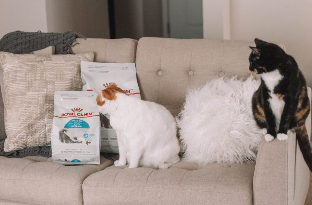 Healthy Cat Guide: Diet & Nutrition Tips