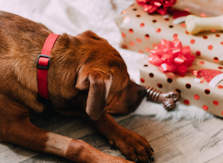 Last-Minute Christmas Presents FOR YOUR PET!