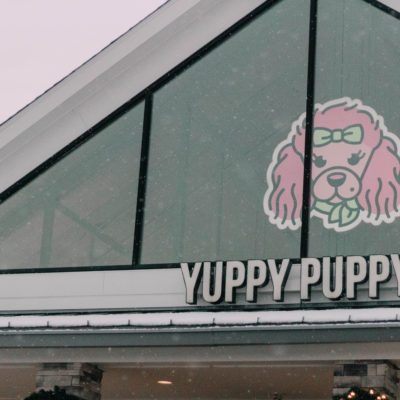 Yuppy Puppy Pet Spa Board-And-Train Puppy Training Review